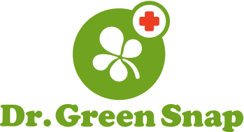 Dr.GreenSnap