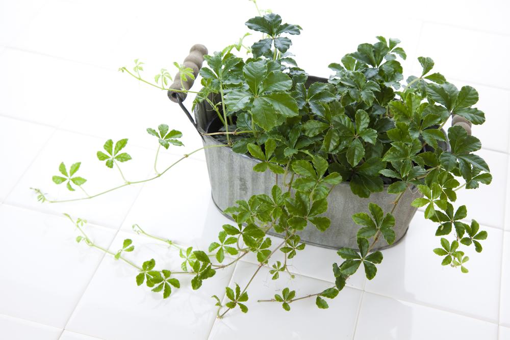わからない 名前 観葉 植物