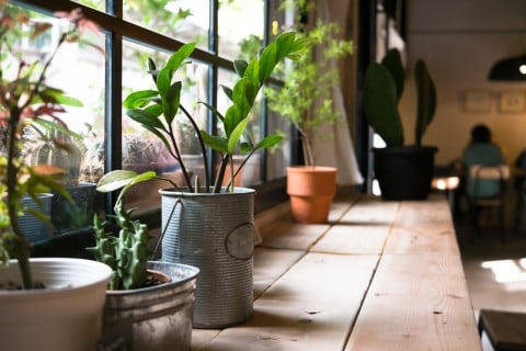 部屋 観葉植物 インテリア 室内 部屋