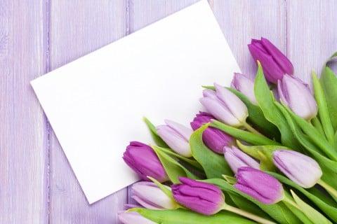 チューリップ 紫 手紙