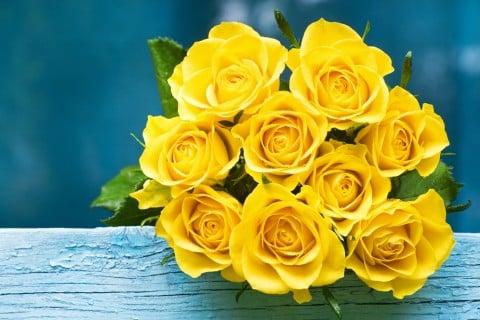 バラ 黄色