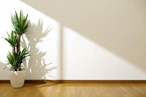 ユッカ 観葉植物  室内 部屋