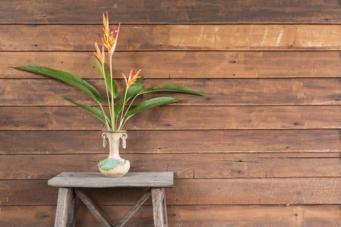 ストレリチア・オーガスタ 木の壁 花瓶