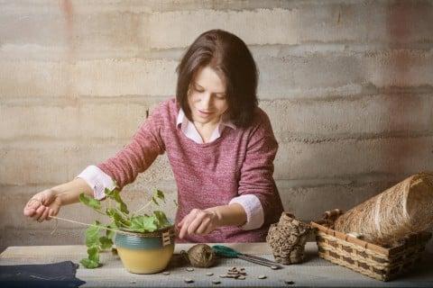 観葉植物 プレゼント 植え替え