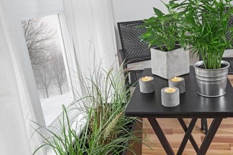 冬 観葉植物 室内