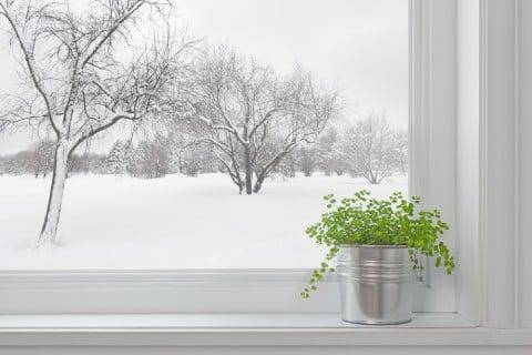 冬 観葉植物 寒い 窓 ブリキ缶