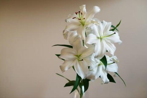 ユリ 花瓶
