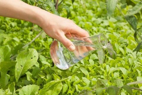 液肥 肥料 水やり 液体肥料