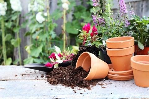 植物 鉢 土 ベランダ ガーデニング