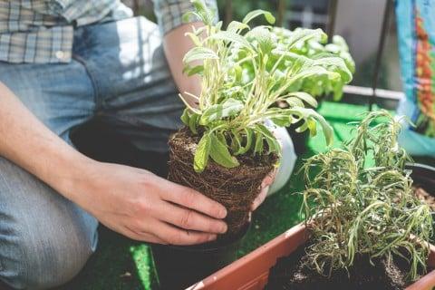 植物 植え付け