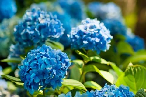 夏に咲く花の名前一覧6月7月8月の花まとめ Horti ホルティ