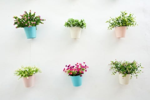 観葉植物 壁掛け