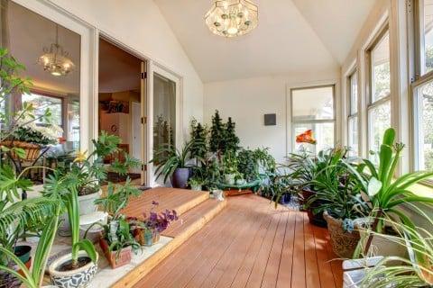 観葉植物 部屋 インテリア 室内 部屋