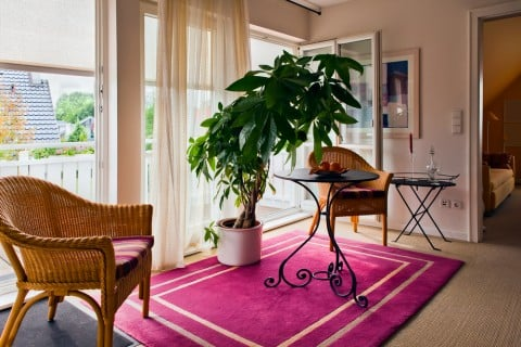 観葉植物 リビング 大型 インテリア 室内 部屋