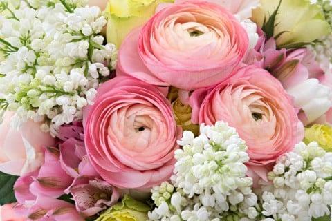 ラナンキュラス 花束 ピンク