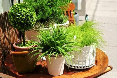 家 観葉植物