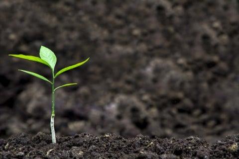 植物 土 芽