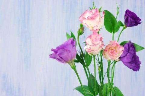 トルコキキョウ 花瓶