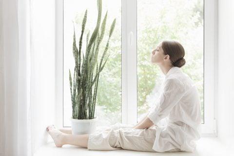 窓ぎわ 観葉植物 多肉植物 サンスベリア サンセベリア 空気清浄効果