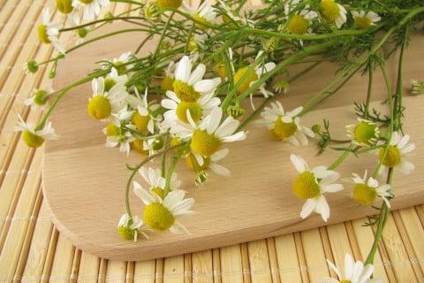 カモミール 種類 切り花