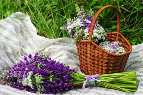 ルピナス 切り花