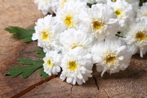 花 葬儀 (2)