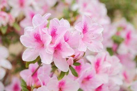Horti by greensnap for Nomi di fiori bianchi