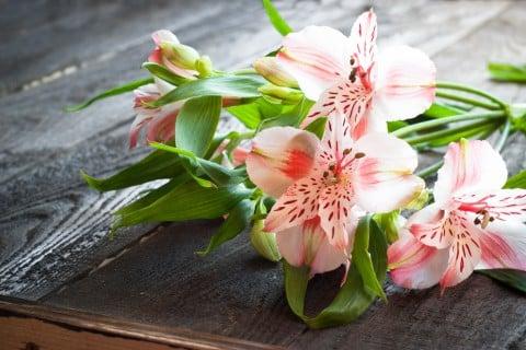 アルストロメリア 剪定 切り花