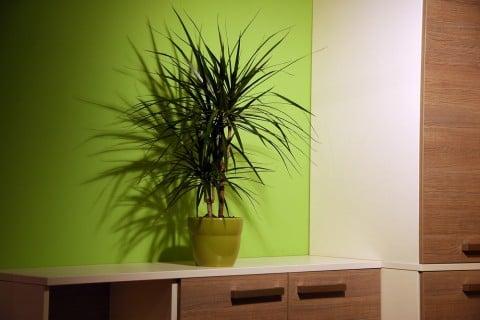 日陰 観葉植物 耐陰性 インテリア 室内 部屋