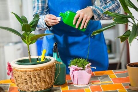 観葉植物 肥料 液肥 肥料