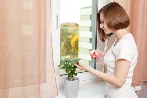 観葉植物 葉水 インテリア 室内 部屋 水やり 霧吹き  防虫