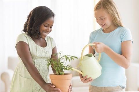 観葉植物 女の子 水やり