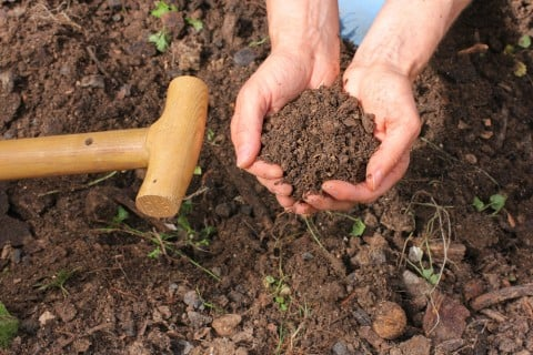 堆肥 土作り 腐葉土  土