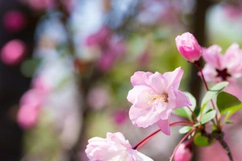 バラの花言葉(色:赤,ピンク,白,青,黄)誕生花や英語 …
