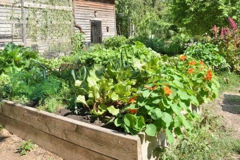 庭 野菜 ガーデニング