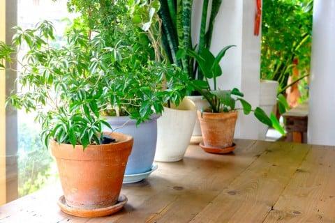開店祝い 観葉植物 植木鉢