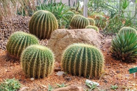 サボテン 砂漠
