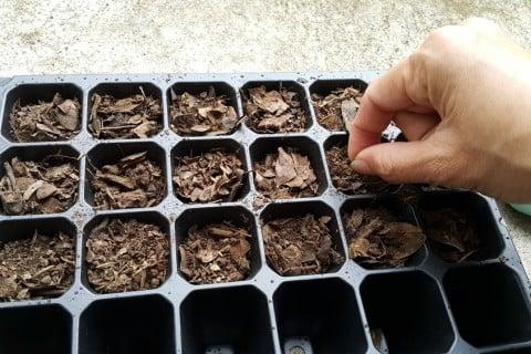 種まき セルトレイ 育生 育苗箱