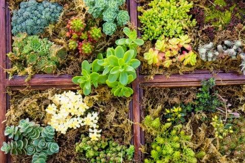 セダム 寄せ植え 多肉 植物 多肉植物