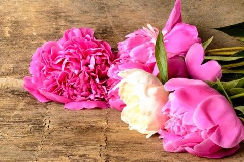 芍薬 切り花