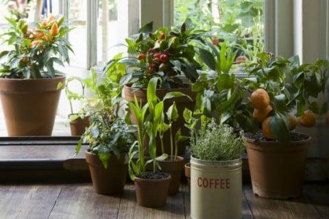 観葉植物 窓辺