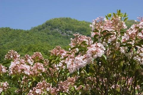 カルミア 空 庭木