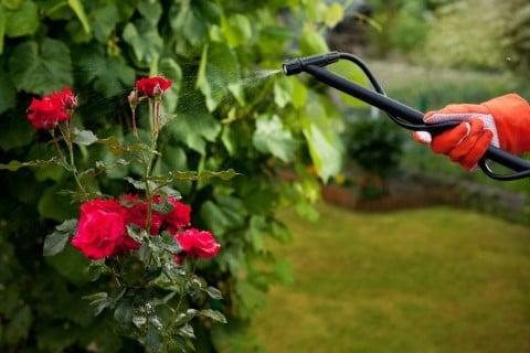 スプレー 防虫 駆除 対策 殺虫剤 殺菌剤 庭 水やり