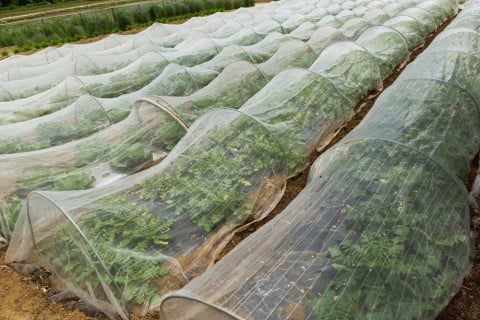 防虫 駆除 対策 殺虫剤 殺菌剤 庭 地植え
