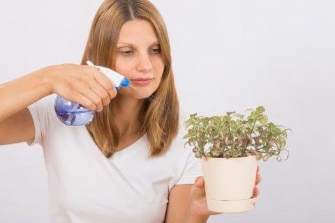 スプレー 防虫 駆除 対策 殺虫剤 殺菌剤 鉢