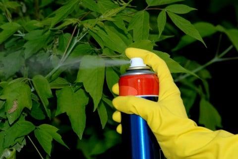 スプレー缶 防虫 駆除 対策 殺虫剤 殺菌剤 葉っぱ