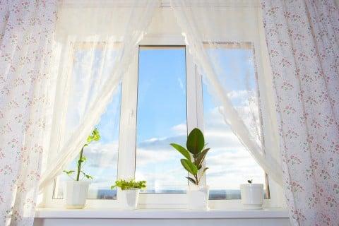 シェフレア カポック 窓 風 鉢