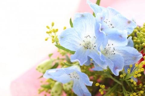 デルフィニウム 花束