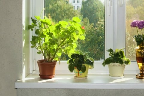 観葉植物 鉢