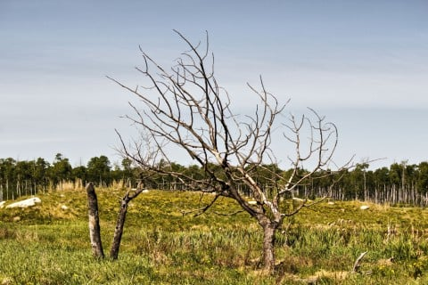 木 樹木 枯れる 草原